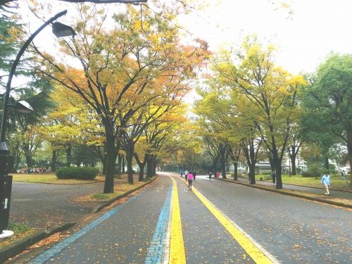 ☆駒沢森林浴☆