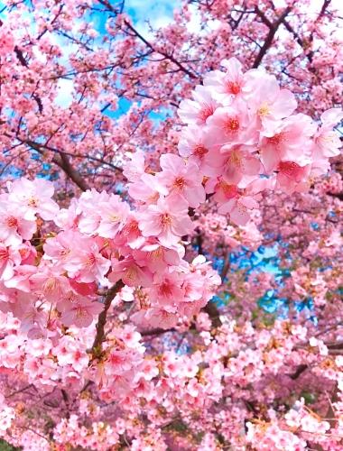 学芸大学 美容室 neoliveora この春オススメ!ピンクブラウンの桜カラー♪